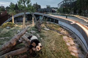 The Panda house